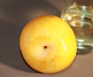 Abrikozenpitten olie